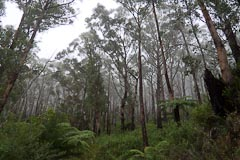 In the mist on the south side of Mt Oberon