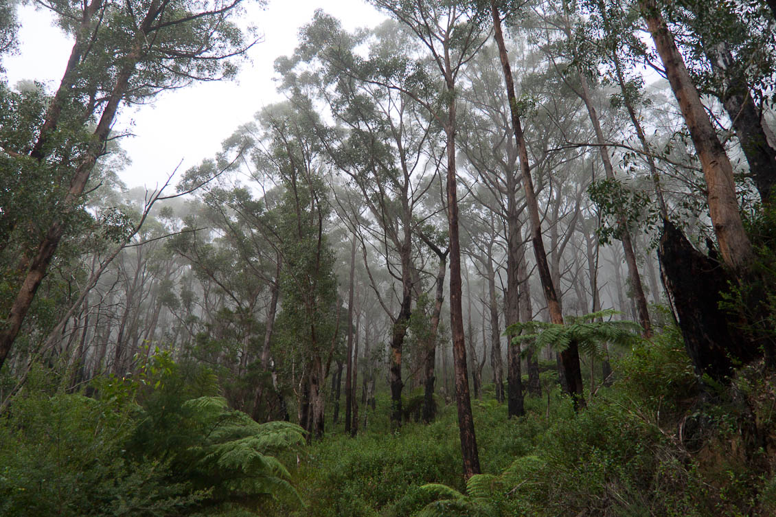 Forest on Mt Oberon